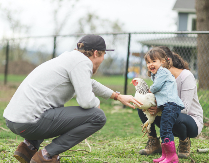 Dad playing with his daughter and a chicken